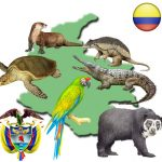 mapacolombia 150x150 - Noticias de animales