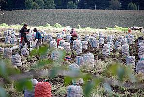 04729fdf70 - La red social de los agricultores