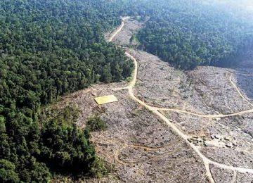 5e1f29bd9363b925e85aaed0d58a0a55 360x260 - Se disparó la tasa de deforestación en Colombia