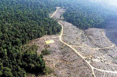 5e1f29bd9363b925e85aaed0d58a0a55 - Se disparó la tasa de deforestación en Colombia