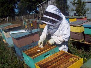 abejas 0071 300x225 - Descubra cómo el campo colombiano está adoptando la tecnología