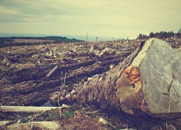 deforestacion pixabay 0 360x260 - ¿Nos vamos a quedar sin bosques?
