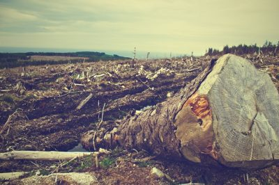 deforestacion pixabay 0 - ¿Nos vamos a quedar sin bosques?
