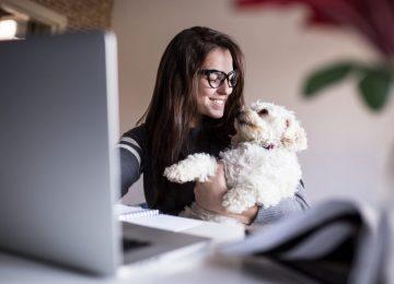 pet tech feature image 980x653 980x653 360x260 - Tecnología para mascotas: Gadgets fantásticos para los amantes de los animales