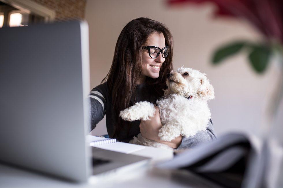 pet tech feature image 980x653 980x653 - Tecnología para mascotas: Gadgets fantásticos para los amantes de los animales