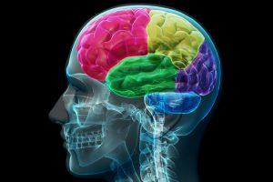 ravenous brain rect 300x200 - Medicina y cuidado del medio ambiente, la innovación tiene una ruta para este lustro
