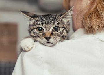 26zoo bienestar Drupal Main Image.var 1503690497 360x260 - ¿Por qué una mascota mejora su vida?