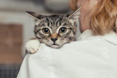 26zoo bienestar Drupal Main Image.var 1503690497 - ¿Por qué una mascota mejora su vida?