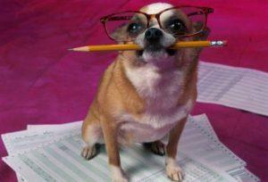 353 900 300x204 - Cómo hacer para que su perro sea educado