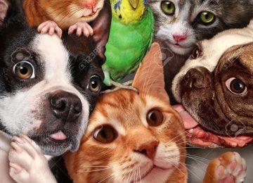 39949085 Concepto de grupo de mascotas como perros gatos un h mster y periquito se reunieron como un s mbolo Foto de archivo 360x260 - Lo último en tecnología para mascotas