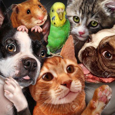 39949085 Concepto de grupo de mascotas como perros gatos un h mster y periquito se reunieron como un s mbolo Foto de archivo - Lo último en tecnología para mascotas