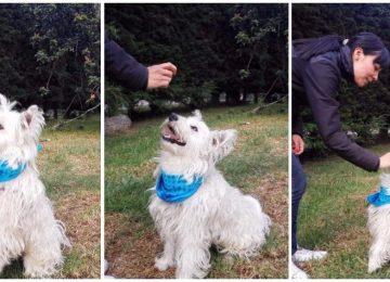 598e44c8463b6 360x260 - Cómo hacer para que su perro sea educado