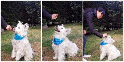 598e44c8463b6 - Cómo hacer para que su perro sea educado