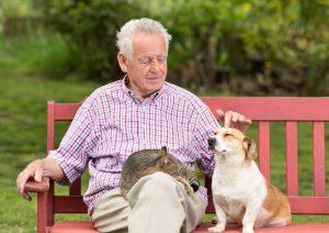 7 Beneficios de tener mascotas en la vejez 300x212 - ¿Por qué una mascota mejora su vida?