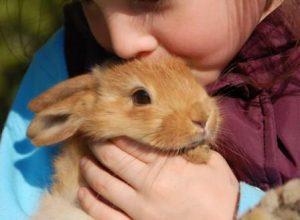 Se puede tener un Conejo como Mascota 300x220 - ¿Por qué una mascota mejora su vida?