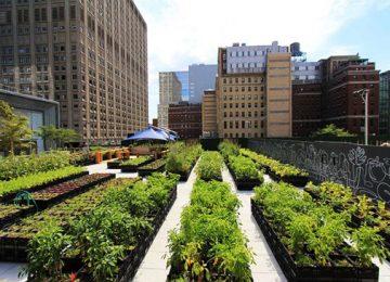 bfa9ecce ea78 42f3 97b0 e80c2785735b 749 499 360x260 - Azoteas y patios son convertidos en cultivos urbanos en EE. UU.
