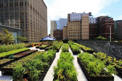 bfa9ecce ea78 42f3 97b0 e80c2785735b 749 499 - Azoteas y patios son convertidos en cultivos urbanos en EE. UU.
