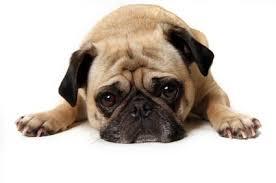 images 2 1 - Cómo hacer para que su perro sea educado