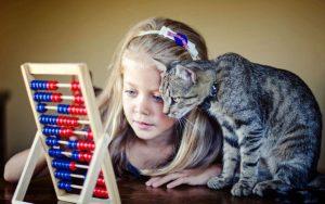 mascotas 21 300x188 - ¿Por qué una mascota mejora su vida?
