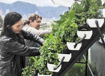 matas   vivir   agosto 29 360x260 - Las mujeres que cultivan en las terrazas del centro de Bogotá