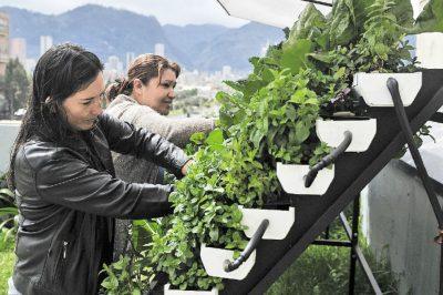 matas   vivir   agosto 29 - Las mujeres que cultivan en las terrazas del centro de Bogotá