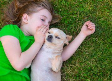 niña habla perro mediatrends 600x400 360x260 - Prepárate: en 10 años podremos hablar con nuestras mascotas