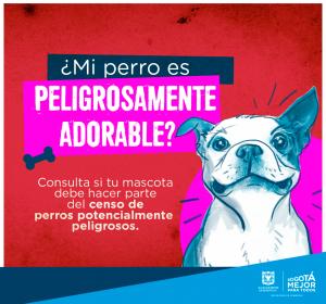 perros3 300x280 - Seguro de Responsabilidad Civil Extracontractual para mascotas ya está en el mercado