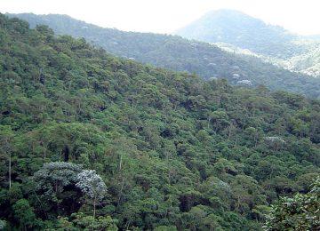 Alto del Nudo foto org colparques 360x260 - Se mueren los Cerros