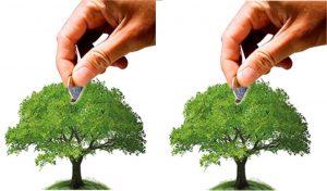 BONOSDECARBONOjpg 3142390 p9 300x176 - Sostenibilidad, la acción presente con mayor futuro
