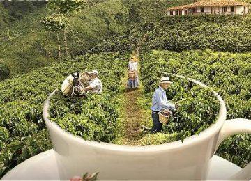 IMAGEN 16360556 2 360x260 - Historias ejemplares, desde la semilla hasta la taza, se tejen alrededor del café