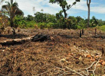 e6cf2c7165a161e6bf84142312ff73ca 360x260 - Trabajar para restaurar los ecosistemas
