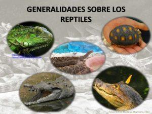 zoocra comercial de reptiles en colombia 2 638 300x225 - Cerca de 1.200 especies están amenazadas