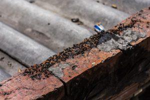 1502987826309 MRM00229 300x200 - Visitamos a El Mochuelo, el barrio de Bogotá que hoy vive entre las moscas
