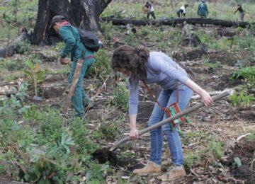 59e020600eca2 360x260 - La maratónica siembra de 6.000 árboles para restaurar cerros de Bogotá