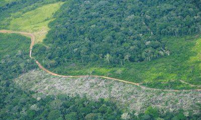 carretera ilegal amazonas 1509392683 - Carreteras, un problema global