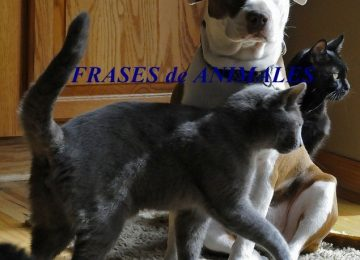 frases de animales 360x260 - Como perros y gatos