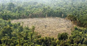 """34164 12517 1 300x158 - """"Si los bosques siguen en pie, es por nosotros"""": indígenas en la Cumbre de Cambio Climático"""