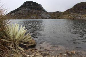 59c280845c7e4 300x199 - La mitad de ecosistemas en Colombia están amenazados