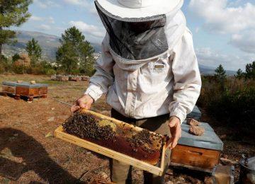 59fcf69f251bb 360x260 - Una colmena de problemas para las abejas a causa de los pesticidas