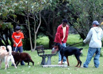 5a136d7053fcc 360x260 - Un perro no es solo compañía, también ayuda a prevenir enfermedades