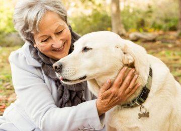 5a189668dbb09 360x260 - Un perro amigo ayuda a la buena salud del corazón