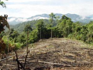 """Deforestacion 300x225 - """"Si los bosques siguen en pie, es por nosotros"""": indígenas en la Cumbre de Cambio Climático"""