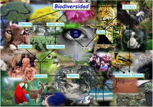 Mapa conceptual Biodiversidad.cmap  300x210 - Este viernes The Royal Botanic Gardens Kew reconoce el trabajo de Colombia para proteger la biodiversidad