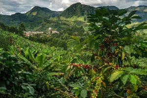colombiacoffeeregionblogpostnytimes 300x200 - Paisaje Cultural Cafetero, destino clave del 20