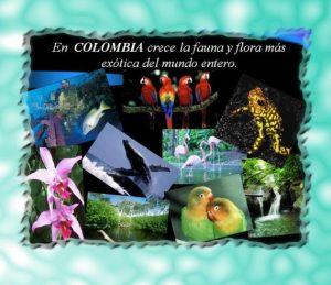 flora y fauna2 300x259 - La mitad de ecosistemas en Colombia están amenazados