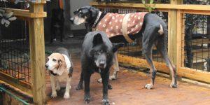 landscape 1453847229 dog sanctuary crop 1 300x150 - Las mascotas también se vuelven viejas