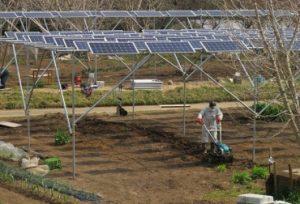 solar y cultivo 300x204 - Empresa francesa dice que granjas solares son alternativa energética para Colombia