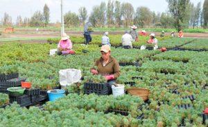 Los efectos del cambio climático que se enfrentan obligan a que la agricultura cambie. Imágen Ilustrativa 300x184 - Clima le abre opción de negocios a Colombia por US$ 195.000 millones