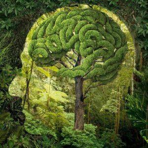 conciencia verde1 300x300 - PRESCRIPCIÓN DE LA VITAMINA N : NATURALEZA, ES RECETAR VIDA