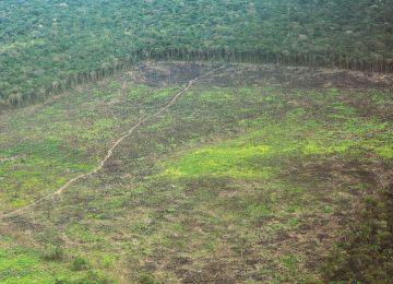 06ABR PAIS NOTA1ph01 1522965493 360x260 - Corte Suprema, al rescate de la Amazonía